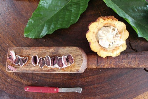 What Is a Cacao Cut Test & When Is it Useful?