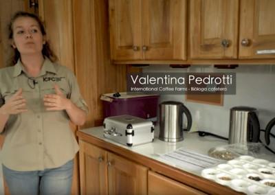 Valentina Pedrotti - International Coffee Farms